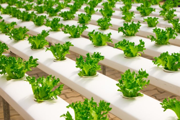 agriculture-basil-bunch-348689